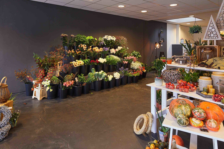 ACS Bloem & Plant
